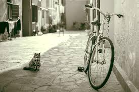 自転車を処分!費用はどれくらいかかるのか?